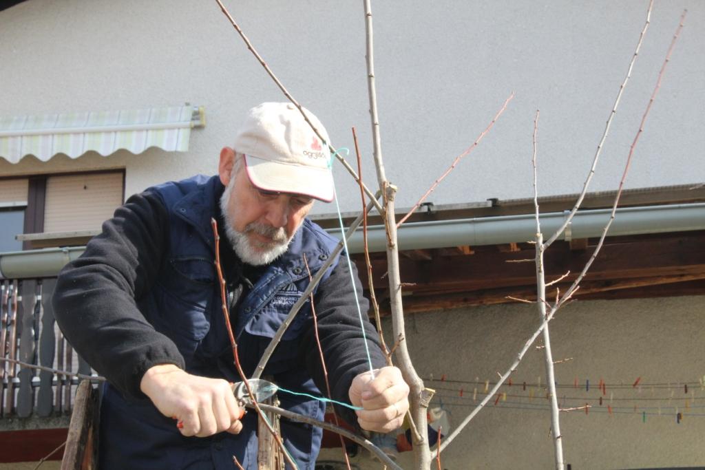 Prikaz rezi sadnega drevja